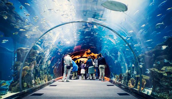 Thủy cung Trí Nguyên – đại dương thu nhỏ ở Nha Trang